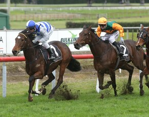 Sleeping Beauty takes out Tauranga Classic